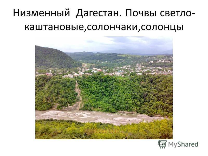 Низменный Дагестан. Почвы светло- каштановые,солончаки,солонцы