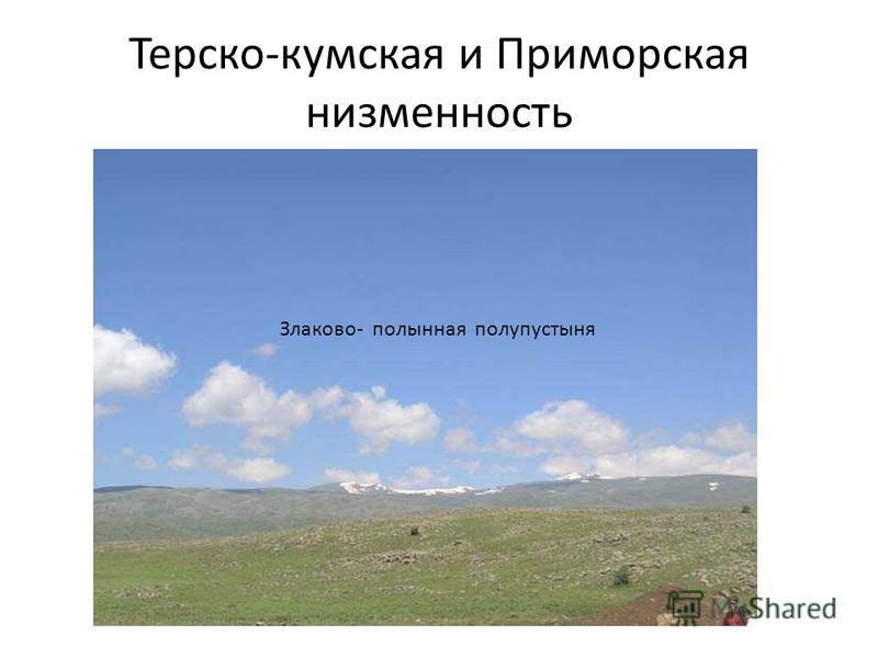 Терско-кумская и Приморская низменность Злаково- полынная полупустыня