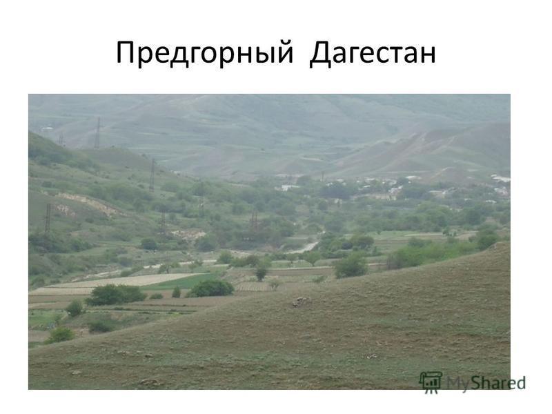 Предгорный Дагестан