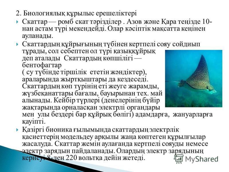 2. Биологиялық құрылыс ерешеліктері Скаттар ромб скат тәрізділер. Азов және Қара теңізде 10- нан астам түрі мекендейді. Олар кәсіптік мақсатта кеңінен ауланады. Скаттардың құйрығының түбінен кертпелі сояу сойдиып тұрады, сол себептен ол түрі қазыққұй