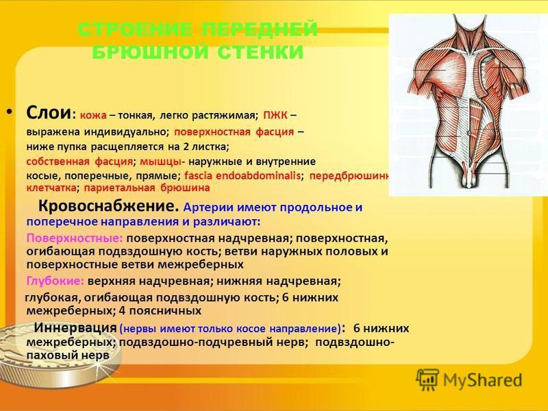 СТРОЕНИЕ ПЕРЕДНЕЙ БРЮШНОЙ СТЕНКИ Слои : кожа – тонкая, легко растяжимая; ПЖК – выражена индивидуально; поверхностная фасция – ниже пупка расщепляется на 2 листка; собственная фасция; мышцы- наружные и внутренние косые, поперечные, прямые; fascia endo