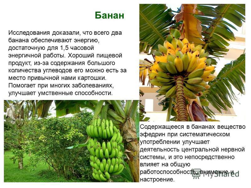 Банан Исследования доказали, что всего два банана обеспечивают энергию, достаточную для 1,5 часовой энергичной работы. Хороший пищевой продукт, из-за содержания большого количества углеводов его можно есть за место привычной нами картошки. Помогает п