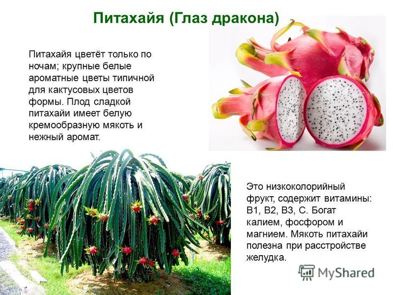 Питахайя (Глаз дракона) Питахайя цветёт только по ночам; крупные белые ароматные цветы типичной для кактусовых цветов формы. Плод сладкой питахайи имеет белую кремообразную мякоть и нежный аромат. Это низкокалорийный фрукт, содержит витамины: В1, В2,