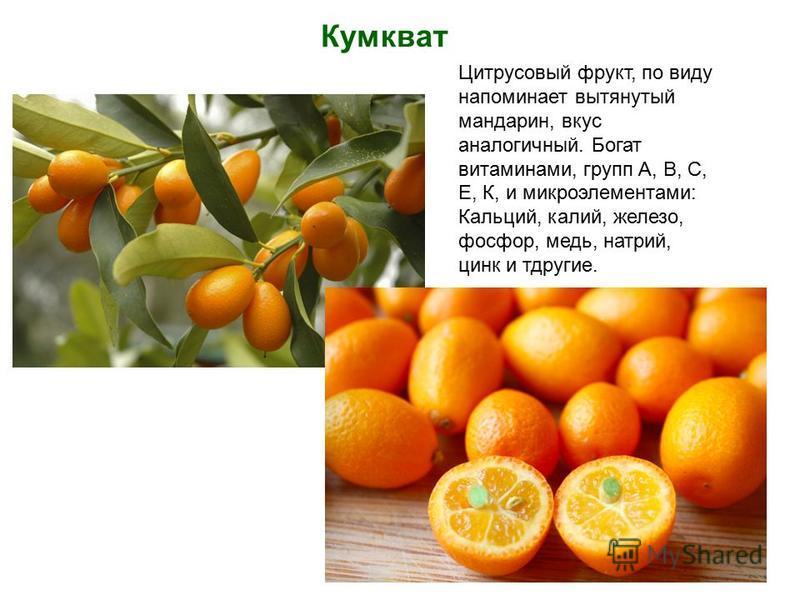 Кумкват Цитрусовый фрукт, по виду напоминает вытянутый мандарин, вкус аналогичный. Богат витаминами, групп А, В, С, Е, К, и микроэлементами: Кальций, калий, железо, фосфор, медь, натрий, цинк и тдругие.