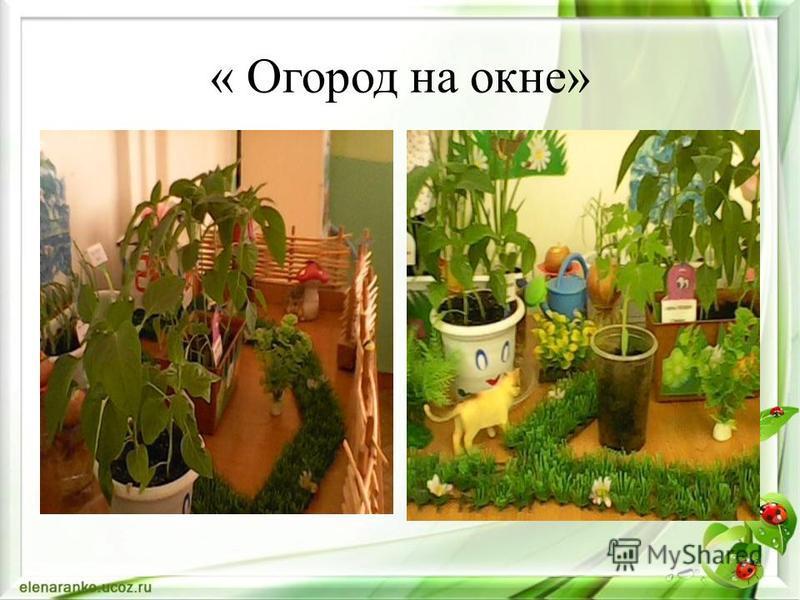 « Огород на окне»