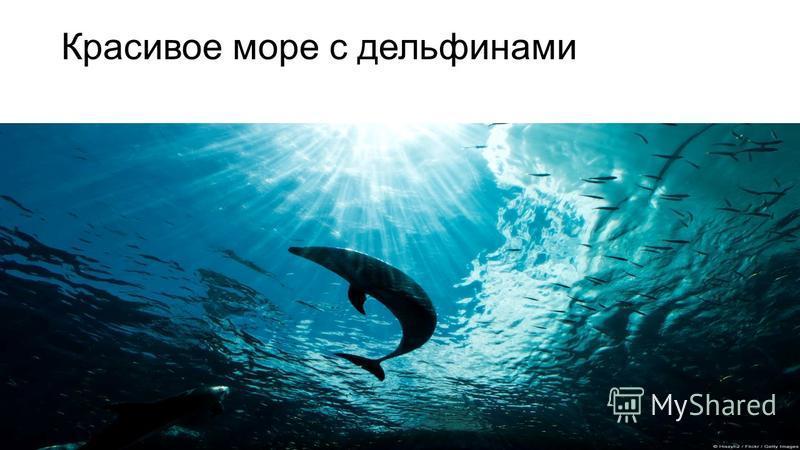 Красивое море с дельфинами