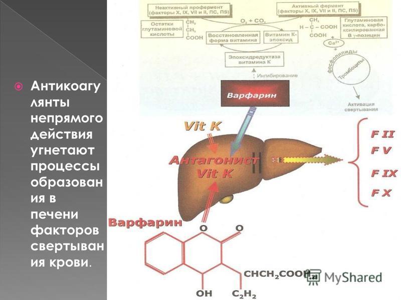 Антикоагу лянты непрямого действия угнетают процессы образован ия в печени факторов свертывания крови.