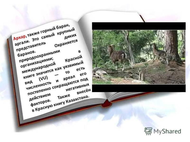 Архар, также горный баран, аргали. Это самый крупный представитель диких баранов. Охраняется природоохранными организациями; в международной Красной книге значится как уязвимый вид (VU) то есть численность и ареал его постепенно сокращаются под дейст