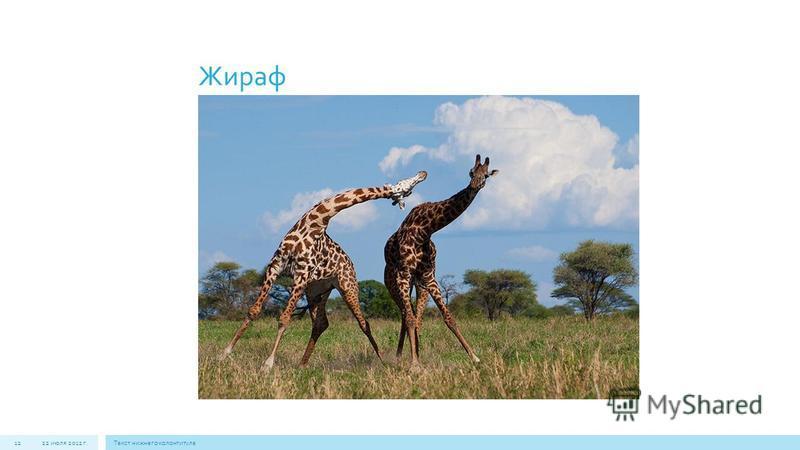Жираф 22 июля 2012 г.Текст нижнего колонтитула 12