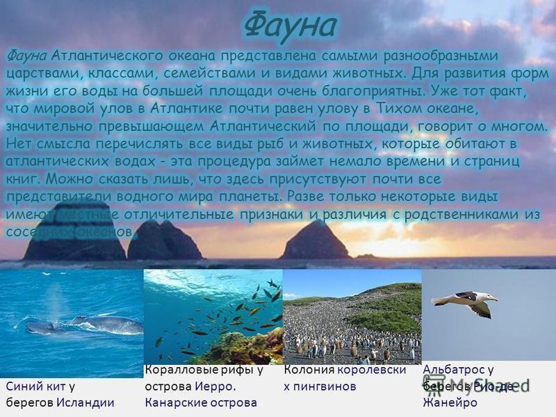 Синий кит у берегов Исландии Коралловые рифы у острова Иерро. Канарские острова Колония королевских пингвинов Альбатрос у берегов Рио-де- Жанейро