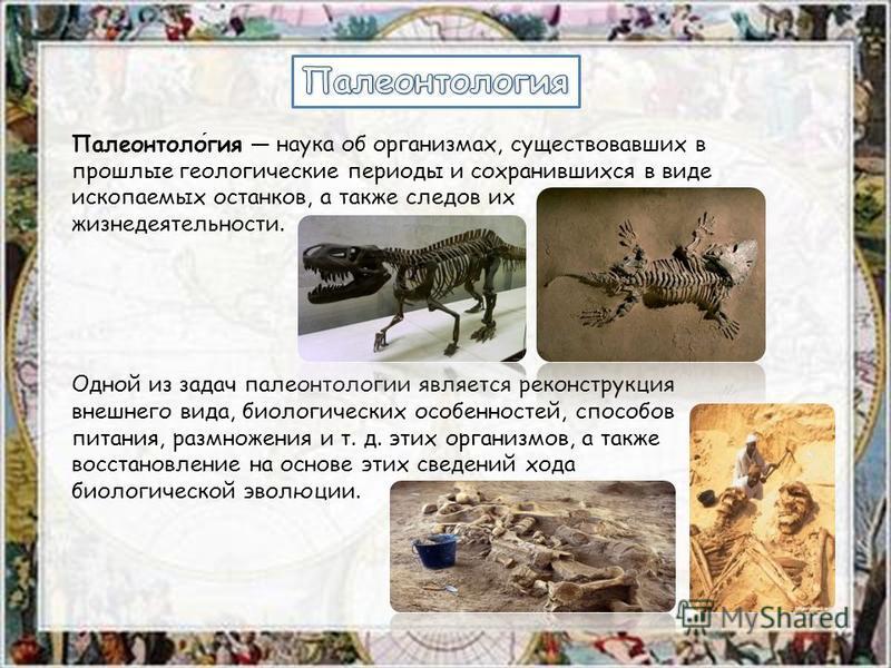 Палеонтология наука об организмах, существовавших в прошлые геологические периоды и сохранившихся в виде ископаемых останков, а также следов их жизнедеятельности. Одной из задач палеонтологии является реконструкция внешнего вида, биологических особен