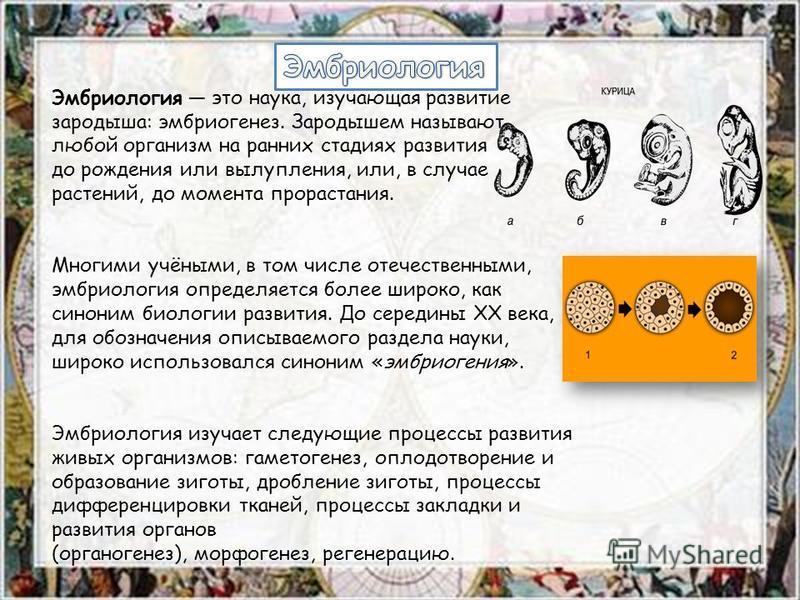 Эмбриология это наука, изучающая развитие зародыша: эмбриогенез. Зародышем называют любой организм на ранних стадиях развития до рождения или вылупления, или, в случае растений, до момента прорастания. Многими учёными, в том числе отечественными, эмб