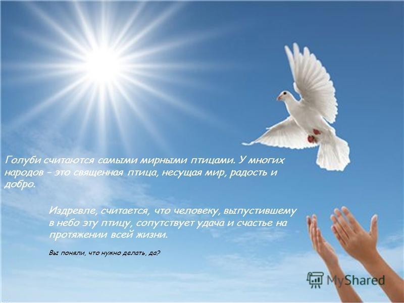 Голуби считаются самыми мирными птицами. У многих народов – это священная птица, несущая мир, радость и добро. Издревле, считается, что человеку, выпустившему в небо эту птицу, сопутствует удача и счастье на протяжении всей жизни. Вы поняли, что нужн