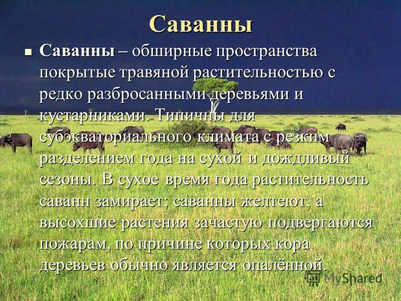 Саванны Саванны – обширные пространства покрытые травяной растительностью с редко разбросанными деревьями и кустарниками. Типичны для субэкваториального климата с резким разделением года на сухой и дождливый сезоны. В сухое время года растительность