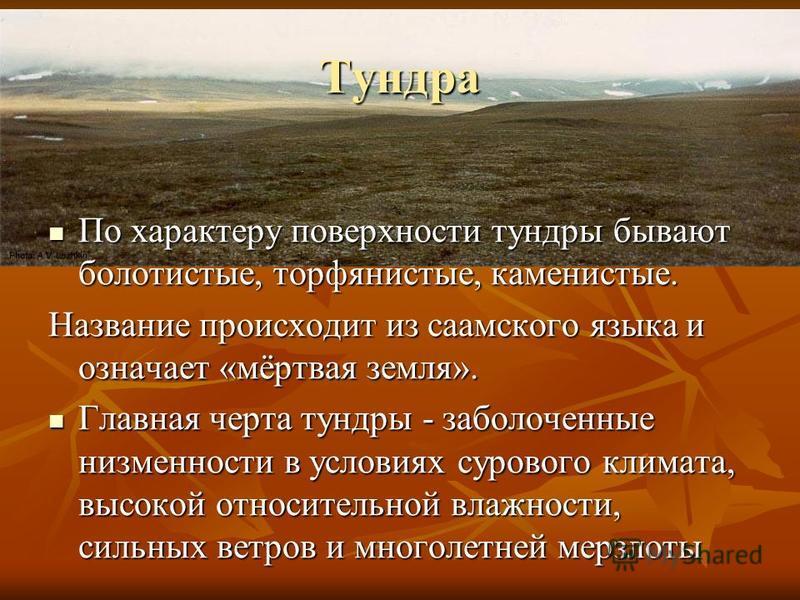 Тундра По характеру поверхности тундры бывают болотистые, торфянистые, каменистые. По характеру поверхности тундры бывают болотистые, торфянистые, каменистые. Название происходит из саамского языка и означает «мёртвая земля». Главная черта тундры - з