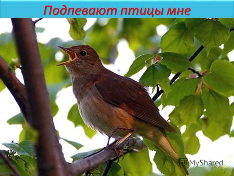 Подпевают птицы мне