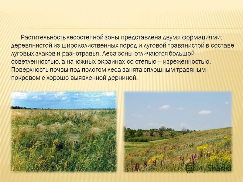 Растительность лесостепной зоны представлена двумя формациями: деревянистой из широколиственных пород и луговой травянистой в составе луговых злаков и разнотравья. Леса зоны отличаются большой осветленностью, а на южных окраинах со степью – изрежен