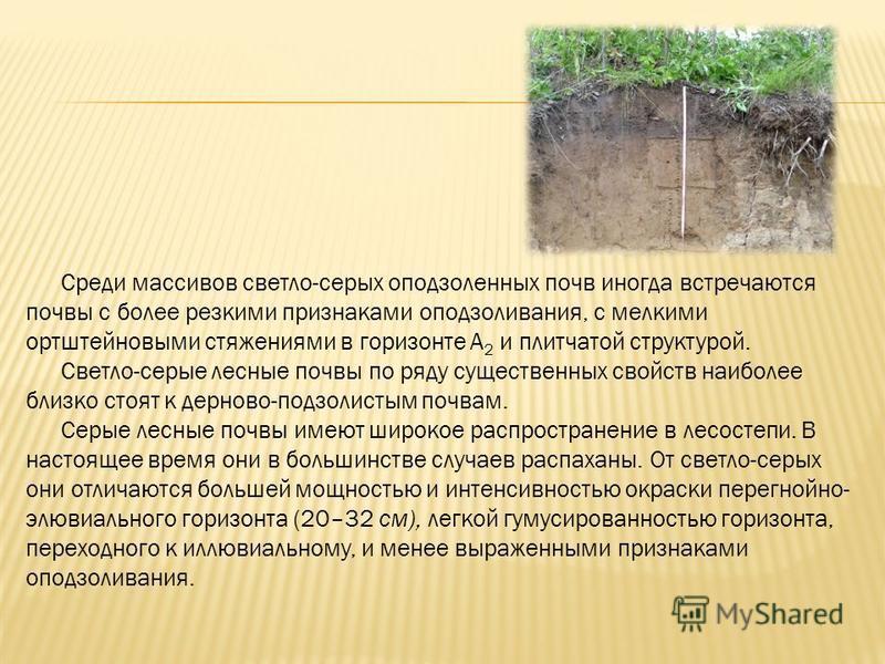 Среди массивов светло-серых оподзоленных почв иногда встречаются почвы с более резкими признаками оподзоливания, с мелкими ортштейновыми стяжениями в горизонте А 2 и плитчатой структурой. Светло-серые лесные почвы по ряду существенных свойств наиболе