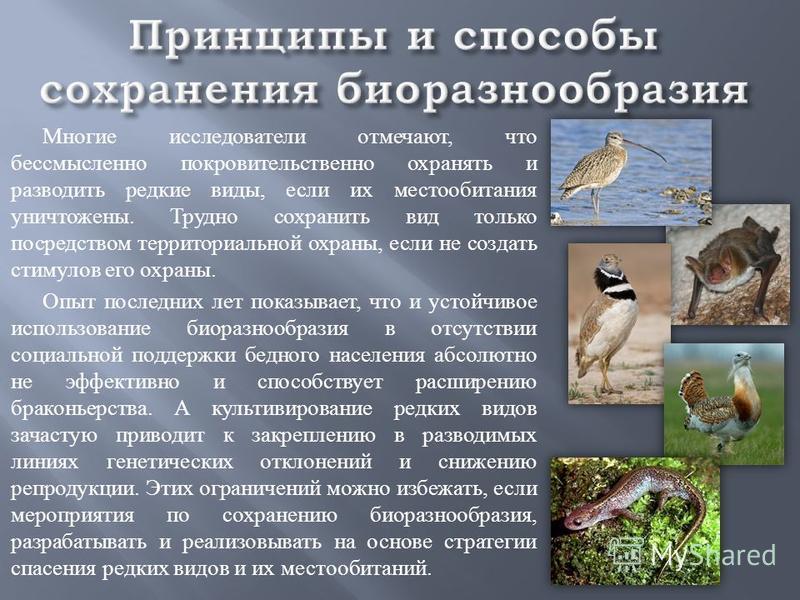 Многие исследователи отмечают, что бессмысленно покровительственно охранять и разводить редкие виды, если их местообитания уничтожены. Трудно сохранить вид только посредством территориальной охраны, если не создать стимулов его охраны. Опыт последних