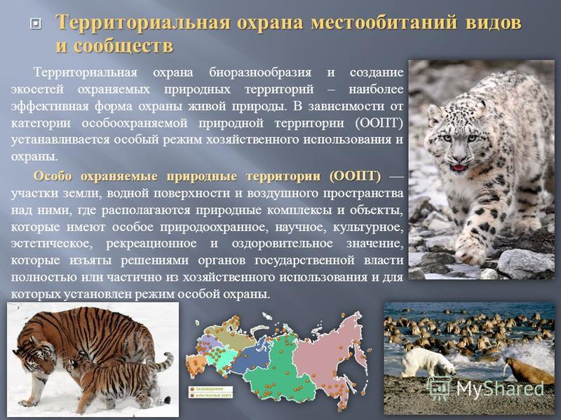 Территориальная охрана местообитаний видов и сообществ Территориальная охрана местообитаний видов и сообществ Территориальная охрана биоразнообразия и создание экосетей охраняемых природных территорий – наиболее эффективная форма охраны живой природы