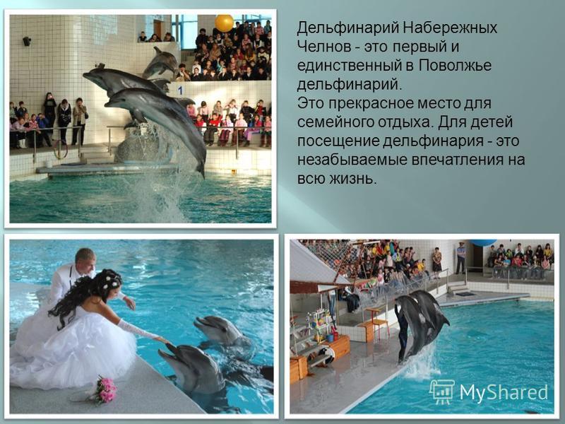 Дельфинарий Набережных Челнов - это первый и единственный в Поволжье дельфинарий. Это прекрасное место для семейного отдыха. Для детей посещение дельфинария - это незабываемые впечатления на всю жизнь.
