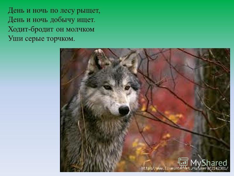 День и ночь по лесу рыщет, День и ночь добычу ищет. Ходит-бродит он молчком Уши серые торчком.