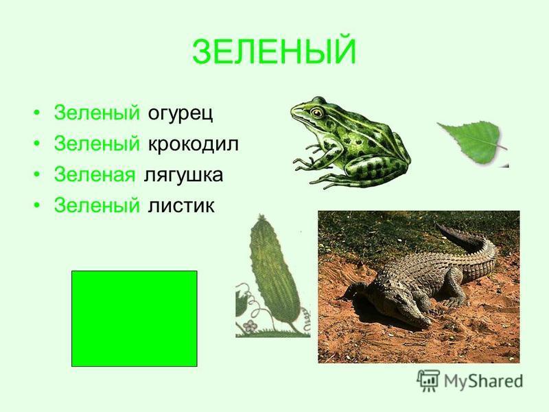 ЗЕЛЕНЫЙ Зеленый огурец Зеленый крокодил Зеленая лягушка Зеленый листик