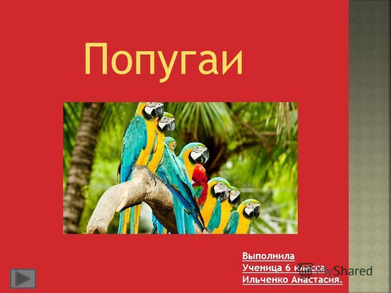 Попугаи Выполнила Ученица 6 класса Ильченко Анастасия.