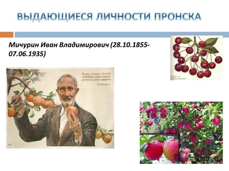 Мичурин Иван Владимирович (28.10.1855- 07.06.1935)