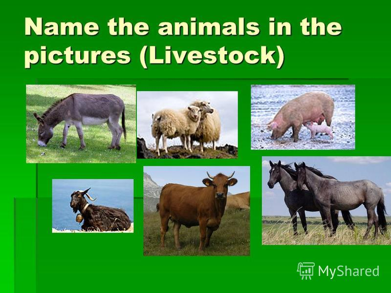 Name the animals in the pictures (Livestock)