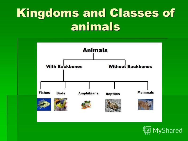 Kingdoms and Classes of animals
