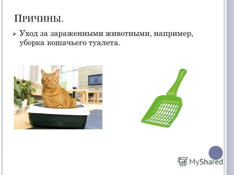 П РИЧИНЫ. Уход за зараженными животными, например, уборка кошачьего туалета.