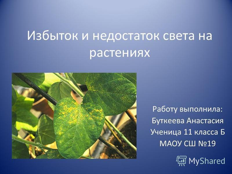 Избыток и недостаток света на растениях Работу выполнила: Буткеева Анастасия Ученица 11 класса Б МАОУ СШ 19