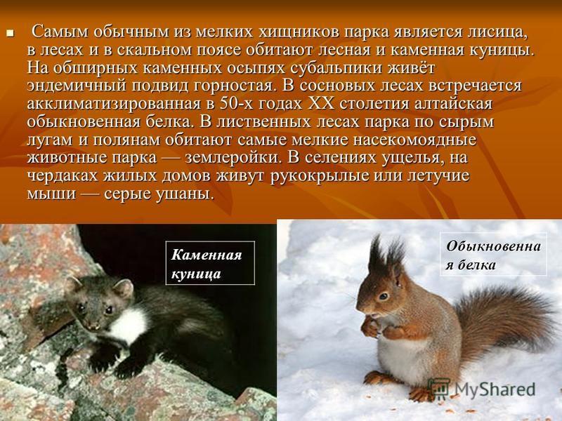 Самым обычным из мелких хищников парка является лисица, в лесах и в скальном поясе обитают лесная и каменная куницы. На обширных каменных осыпях субальпики живёт эндемичный подвид горностая. В сосновых лесах встречается акклиматизированная в 50-х год