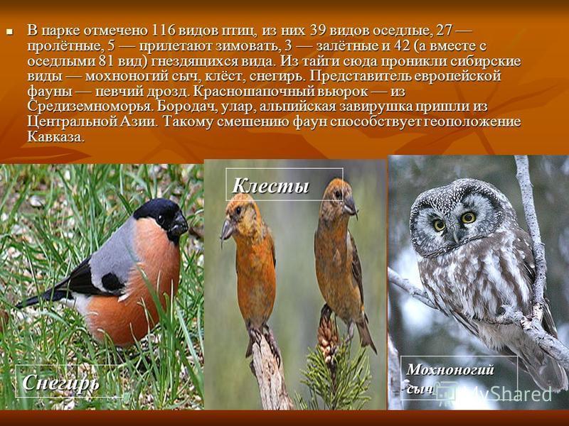 В парке отмечено 116 видов птиц, из них 39 видов оседлые, 27 пролётные, 5 прилетают зимовать, 3 залётные и 42 (а вместе с оседлыми 81 вид) гнездящихся вида. Из тайги сюда проникли сибирские виды мохноногий сыч, клёст, снегирь. Представитель европейск