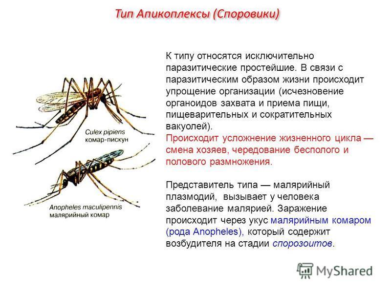 К типу относятся исключительно паразитические простейшие. В связи с паразитическим образом жизни происходит упрощение организации (исчезновение органоидов захвата и приема пищи, пищеварительных и сократительных вакуолей). Происходит усложнение жизнен