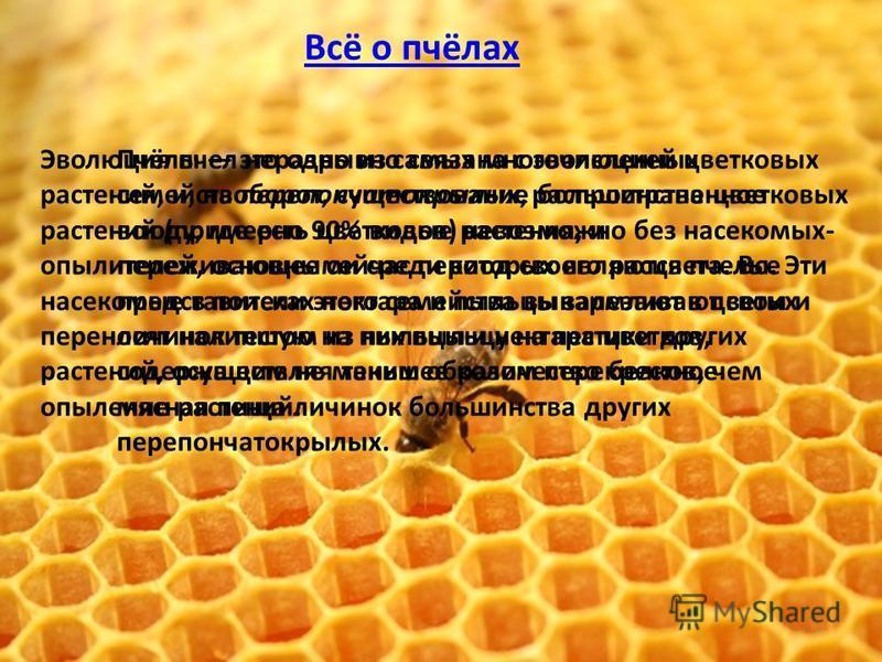 Пчёлы это одно из самых многочисленных семейств перепончатокрылых, распространенное всюду, где есть цветковые растения, и переживающее сейчас период своего расцвета. Все представители этого семейства выкармливают своих личинок тестом из пыльцы и нект