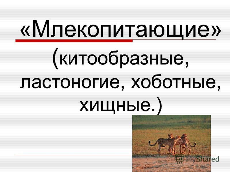 «Млекопитающие» ( китообразные, ластоногие, хоботные, хищные.)