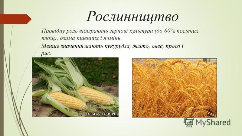 Рослинництво Провідну роль відіграють зернові культури (до 80% посівних площ), озима пшениця і ячмінь. Менше значення мають кукурудза, жито, овес, просо і рис.
