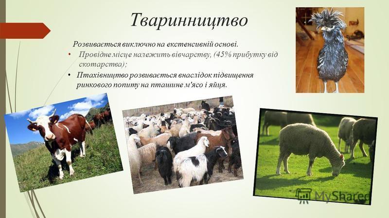 Тваринництво Провідне місце належить вівчарству, (45% прибутку від скотарства); Розвивається виключно на екстенсивній основі. Птахівництво розвивається внаслідок підвищення ринкового попиту на пташине м'ясо і яйця.