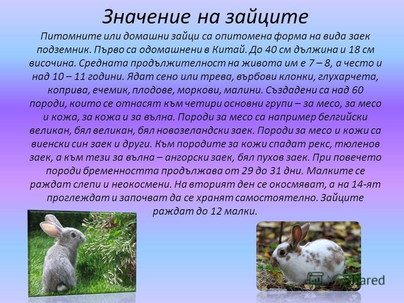 Значение на зайците Питомните или домашни зайци са опитомена форма на вида заек подземник. Първо са одомашнени в Китай. До 40 см дължина и 18 см височина. Средната продължителност на живота им е 7 – 8, а често и над 10 – 11 години. Ядат сено или трев