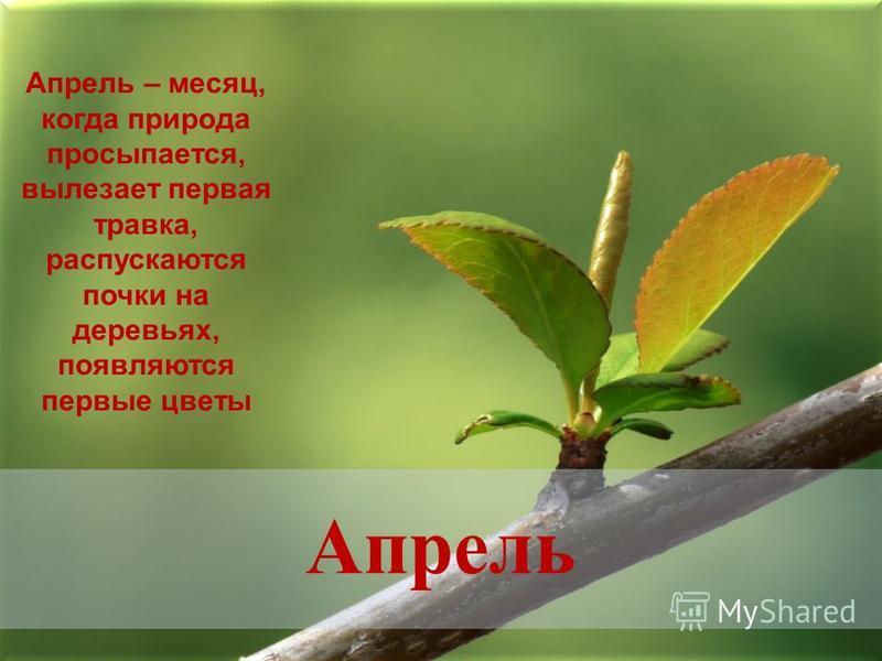Апрель Апрель – месяц, когда природа просыпается, вылезает первая травка, распускаются почки на деревьях, появляются первые цветы