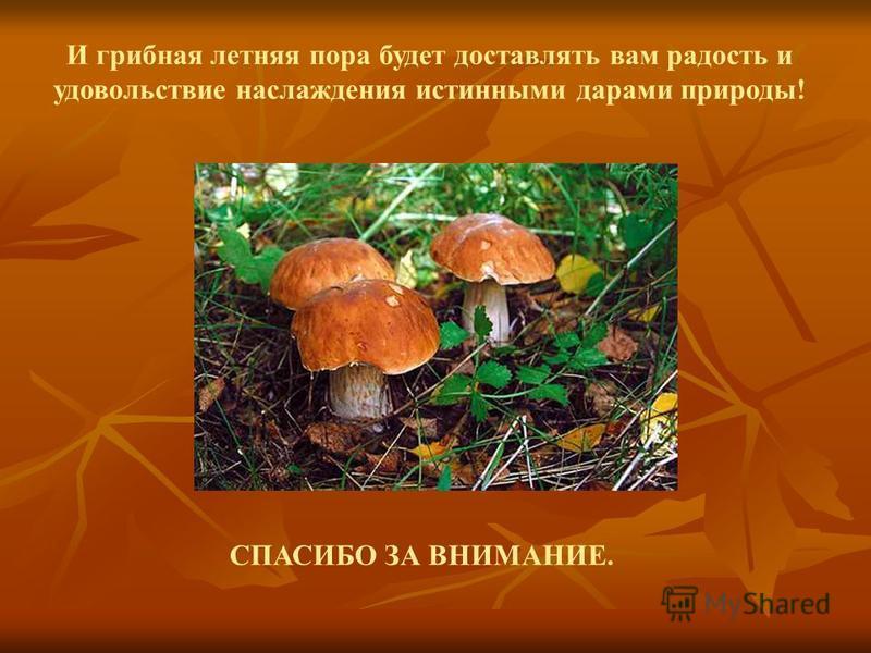 И грибная летняя пора будет доставлять вам радость и удовольствие наслаждения истинными дарами природы! СПАСИБО ЗА ВНИМАНИЕ.