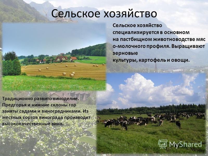 Сельское хозяйство Сельское хозяйство специализируется в основном на пастбищном животноводстве мясо-молочного профиля. Выращивают зерновые культуры, картофель и овощи. Традиционно развито виноделие. Предгорья и нижние склоны гор заняты садами и виног