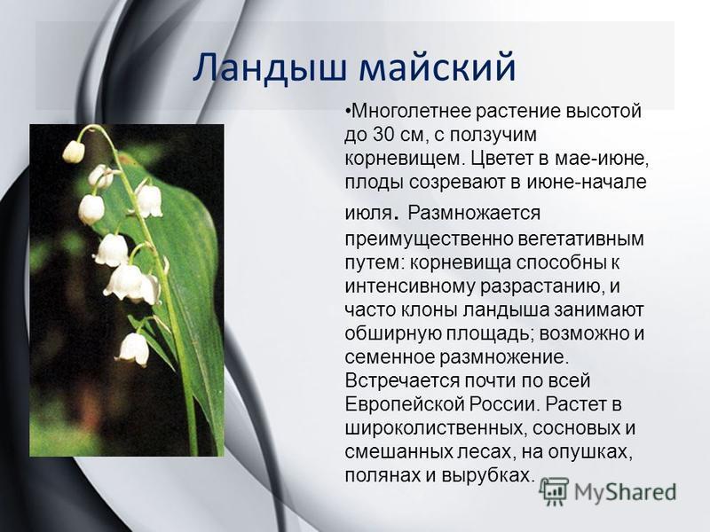 Ландыш майский Многолетнее растение высотой до 30 см, с ползучим корневищем. Цветет в мае-июне, плоды созревают в июне-начале июля. Размножается преимущественно вегетативным путем: корневища способны к интенсивному разрастанию, и часто клоны ландыш
