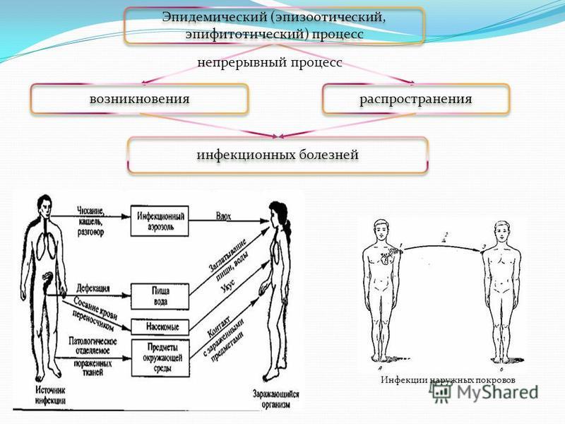 Эпидемический (эпизоотический, эпифитотический) процесс возникновения распространения непрерывный процесс инфекционных болезней Инфекции наружных покровов