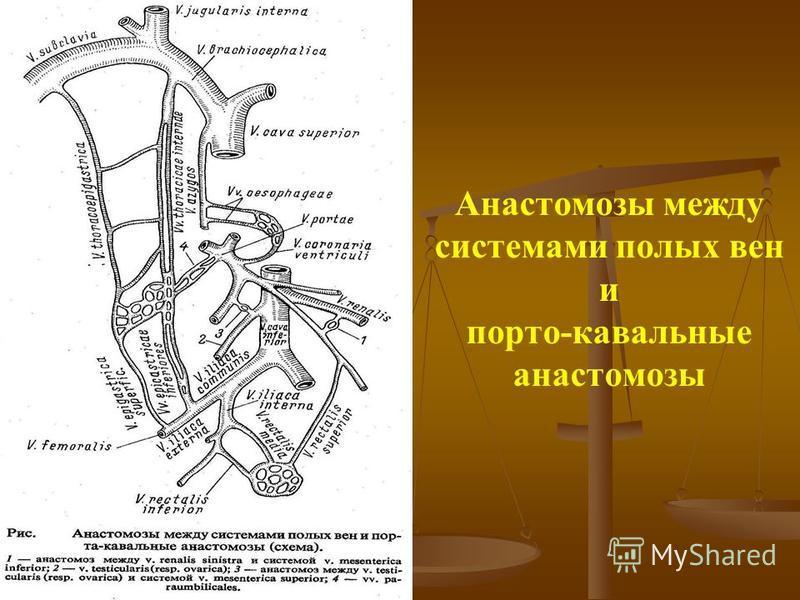 Анастомозы между системами полых вен и порто-кавальные анастомозы