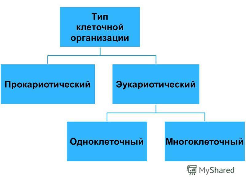 Тип клеточной организации Прокариотический Эукариотический Одноклеточный Многоклеточный