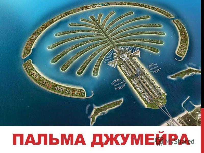 ПАЛЬМА ДЖУМЕЙРА