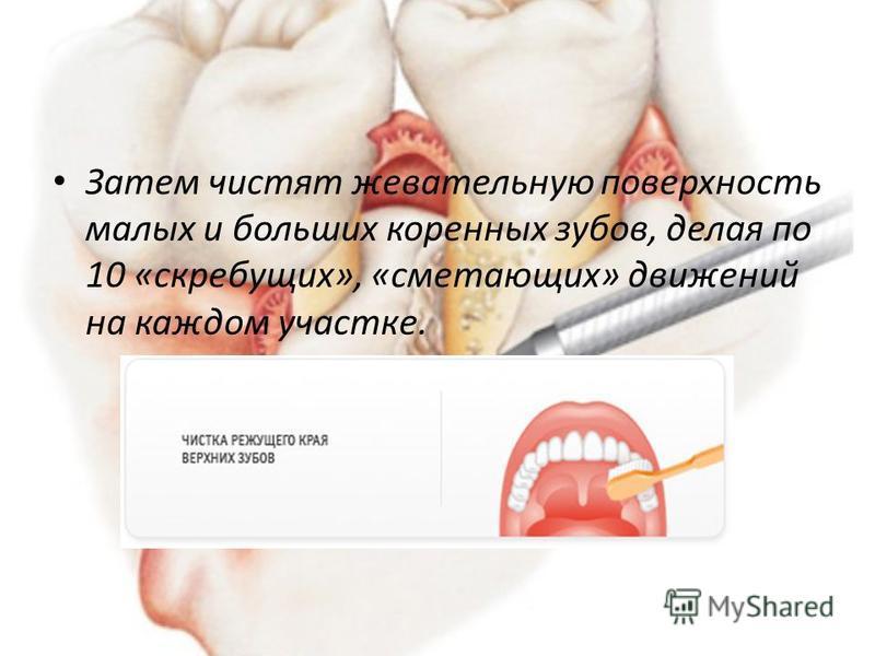Затем чистят жевательную поверхность малых и больших коренных зубов, делая по 10 «скребущих», «сметающих» движений на каждом участке.